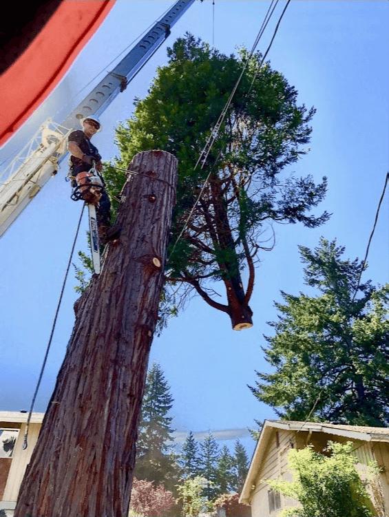 Tree Work Tree Removal