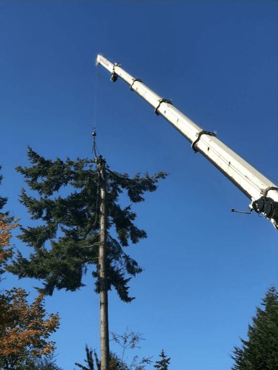 Crane Tree Removal Work Logging Trees
