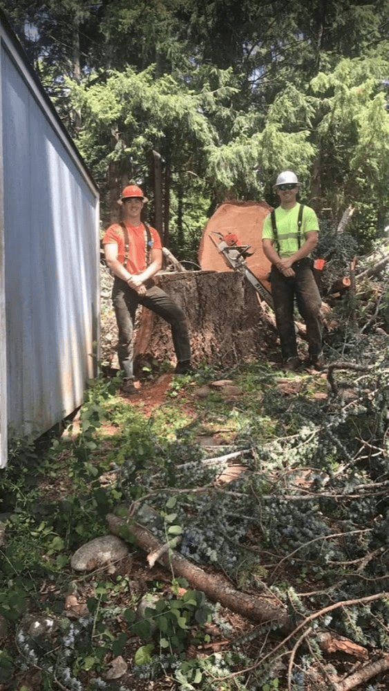Storm Cleanup Tree Debris Removal Care