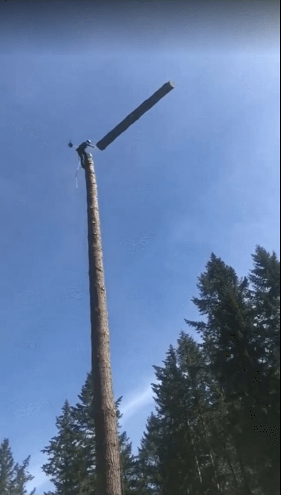 Tree Mid Fall Topping